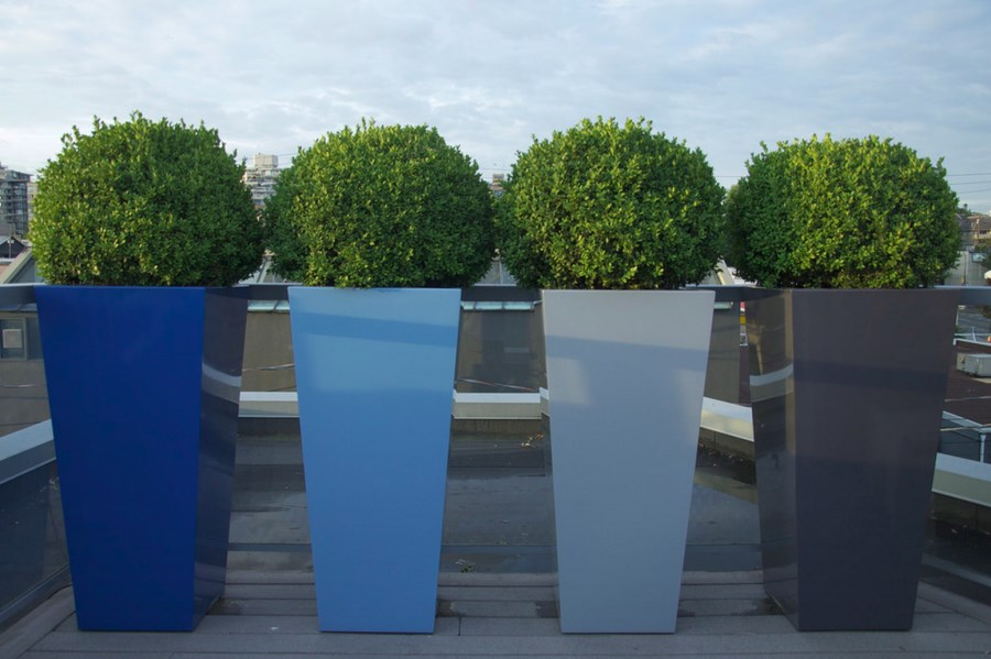 sculpted-boxwood-in-tall-planters.jpg